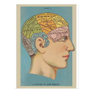 Map of the brain postcard