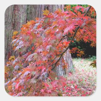 Maple and Cedar Square Sticker
