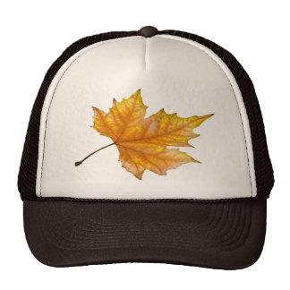 Maple autumn leaf cap