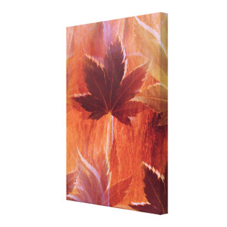 Maple Dream Canvas Print
