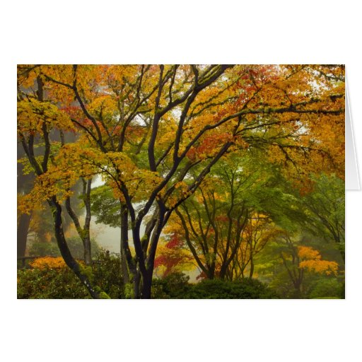 Maple Fall Colors in Japanese Garden Greeting Card