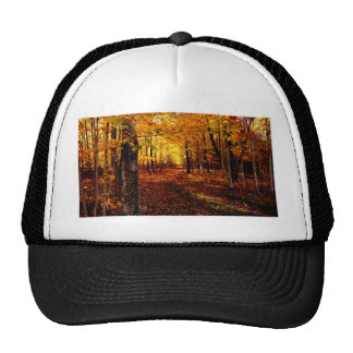 Maple Forest Fall Colour Cap