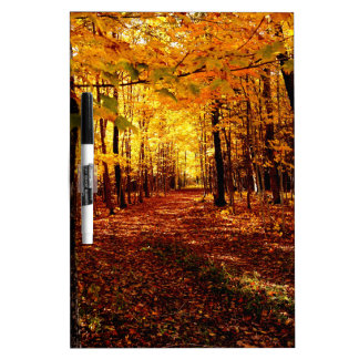 Maple Forest Fall Colour Dry Erase Board
