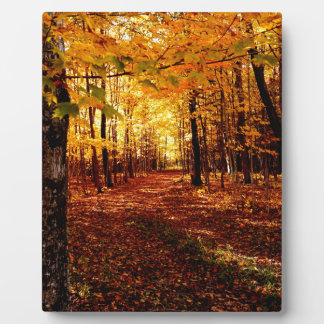Maple Forest Fall Colour Plaque