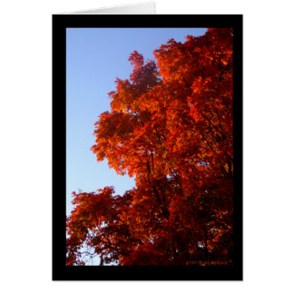 Maple in Reds & Oranges Greeting Card