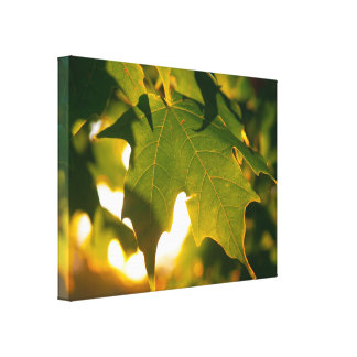 Maple Leaf at Sunset Gallery Wrapped Canvas