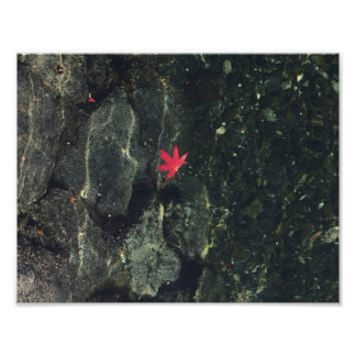 Maple Leaf in Water Poster