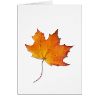 Maple Leaf Note Card