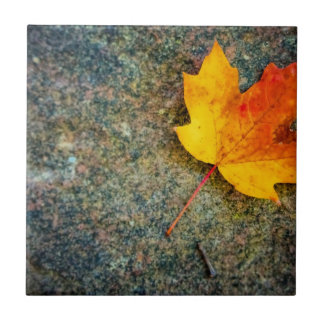 Maple Leaf on Rock Small Square Tile