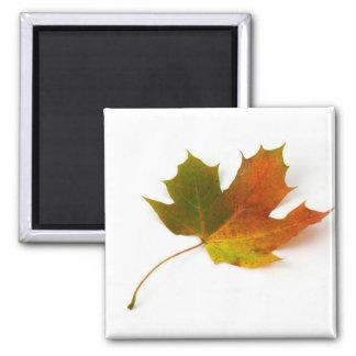 maple leaf square magnet