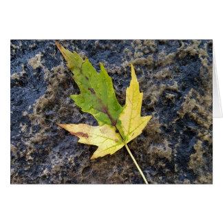 Maple Leaf , white envelopes included Card