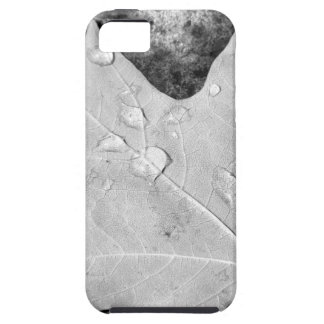 Maple Leaf with Water Droplets iPhone 5 Case
