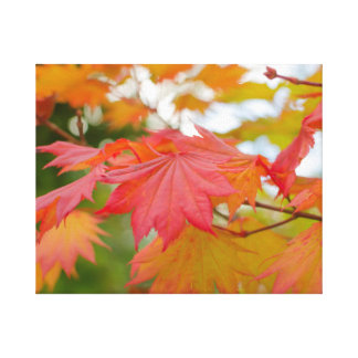 maple leaf  wrapped canvas