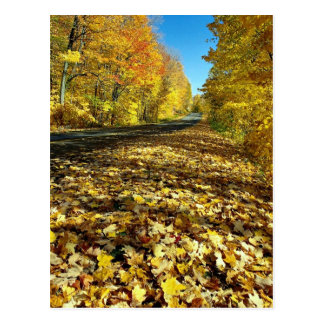 Maple leaves and Fortune Parkway, Gatineau Park, Q Postcard