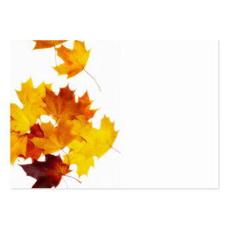 Maple leaves pack of chubby business cards
