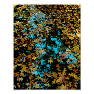 Maple Leaves Floating on Water Poster