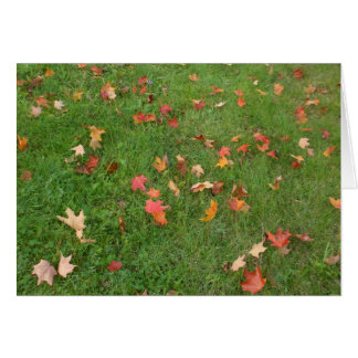 Maple Leaves on Ground-Canada Day-Blank Card