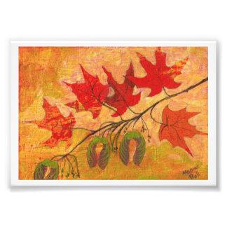Maple Leaves Photo Print
