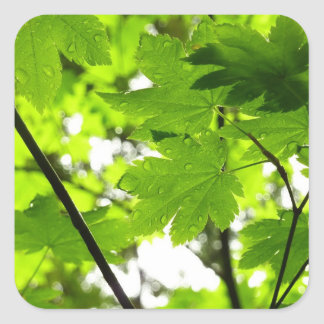 Maple Leaves with Raindrops Square Sticker