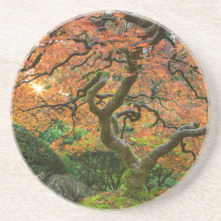 Maple Tree At The Japanese Gardens In Autumn Coaster
