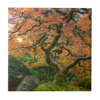 Maple Tree At The Japanese Gardens In Autumn Small Square Tile