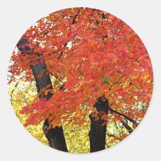 Maple Tree Autumn Classic Round Sticker