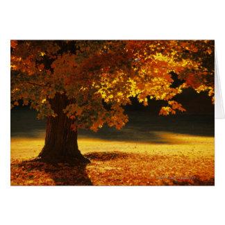 Maple tree , Bennington , Vermont Card