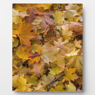 Maple Tree Fall Leaves Background Plaque