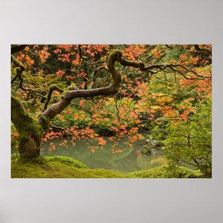 Maple Tree in Portland Oregon Japanese Garden Post Poster