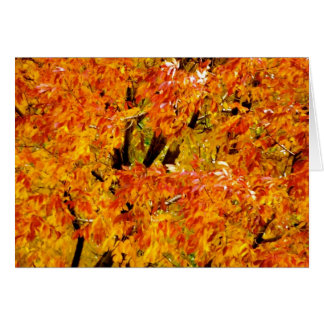 Maple Tree in the Fall Card