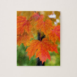 Maple Tree Leaves in Fall Color Closeup Jigsaw Puzzle