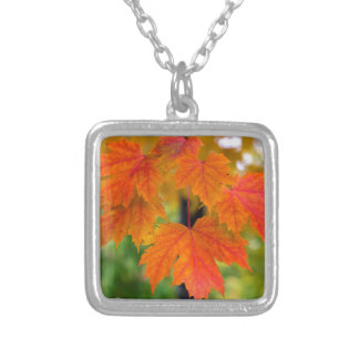 Maple Tree Leaves in Fall Color Closeup Silver Plated Necklace