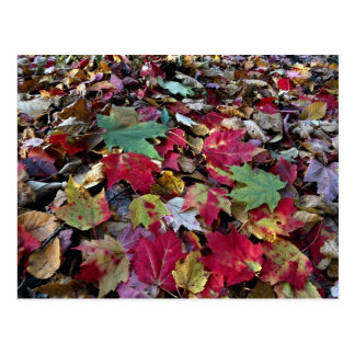 Maple tree leaves on ground in O'Dell Park, New Br Postcard