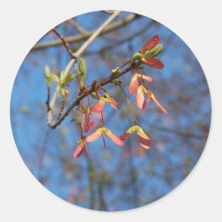 Maple Tree Seeds sticker