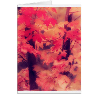 Maple Trees in Fall Card