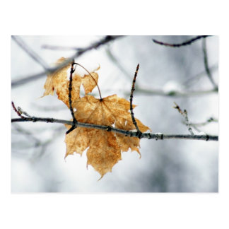 Maple Winter Leaves Frozen Foliage Cold Season Postcard