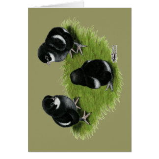 Marans Black Copper Chicks Card
