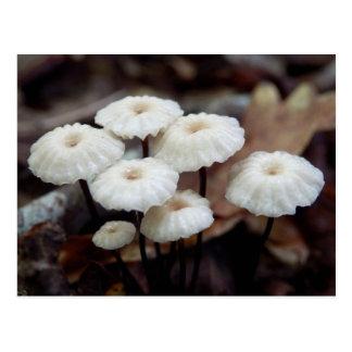 Marasmius rotula Mushroom Postcard