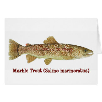 Marble Trout Card