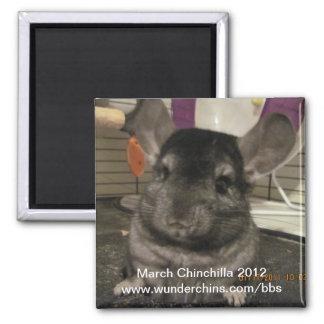 March chinchilla 2012 magnet