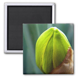 March Flower Bud Square Magnet