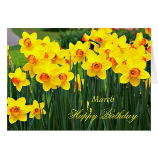 March Stunning Yellow Daffodils Birthday Card