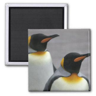Marching Penguins Magnet Fridge Magnets