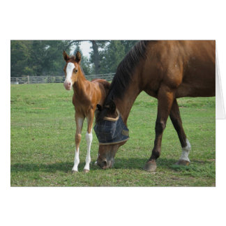 Mare and Foal Stationery Note Card