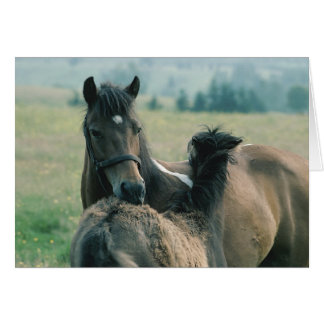 Mare and Foal Grooming Each Other Greeting Card