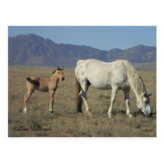 Mare and Foal (Horses) Postcard