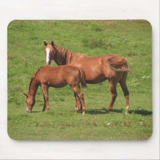 Mare and Foal Mousepad