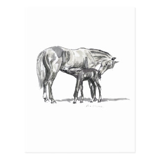 Mare and Foal Postcard