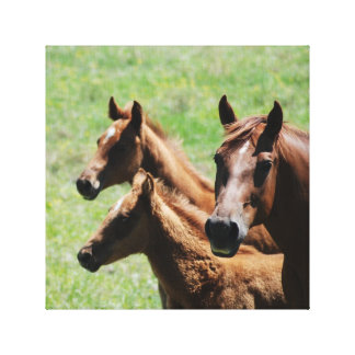 Mare and Foals Stretched Canvas Prints