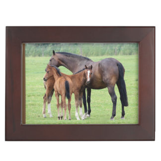 Mare And Two Colts Memory Box